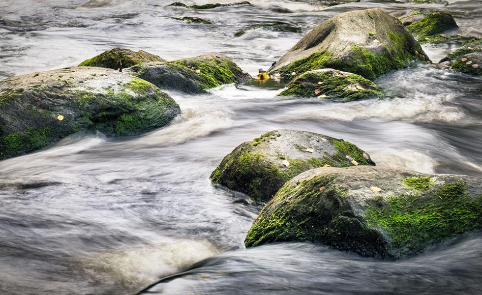 Vesi virtaa kosken kivien välistä.
